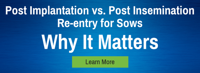 Post Implantation vs. Post Insemination Re-entry for Sows - Why it Matters Learn More