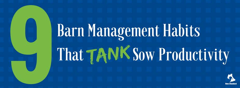 Barn Management Habits That Tank Sow Productivity (1)