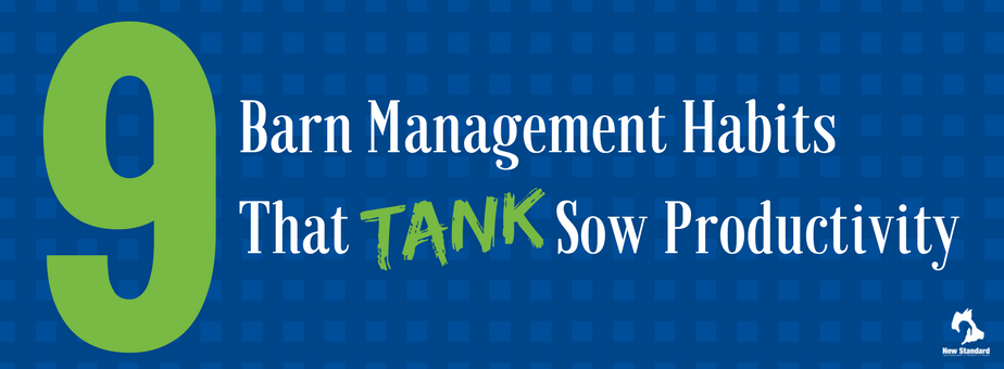Barn Management Habits That Tank Sow Productivity (1)