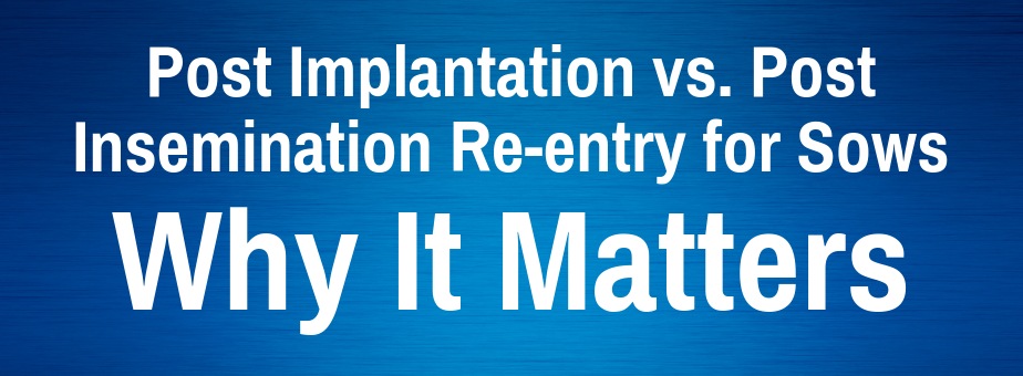Post Implantation vs. Post Insemination Re-entry for Sows_ Why It Matters (2)