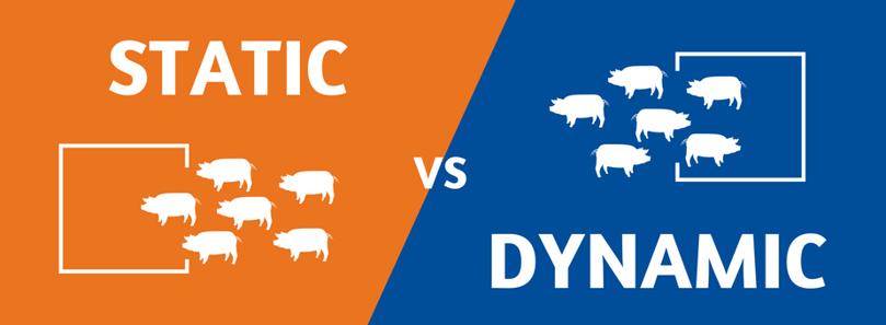 Static vs Dynamic (3).png