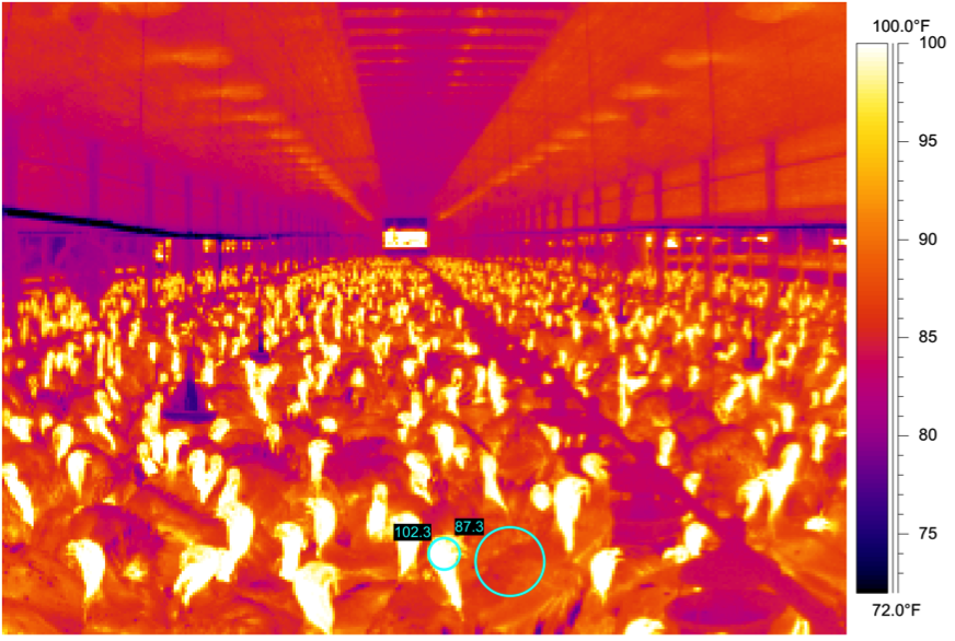 poultry temperature.png